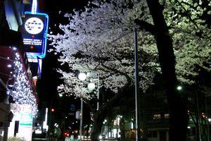 sakura_1_320x200